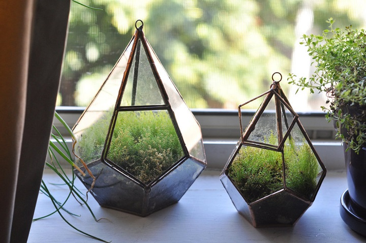 Ashley Bram-Johnson - Glass Terrariums for All Kinds of Plants