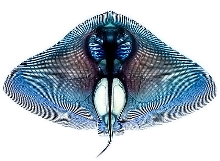Adam Summers - Vibrantly Dyed Fish