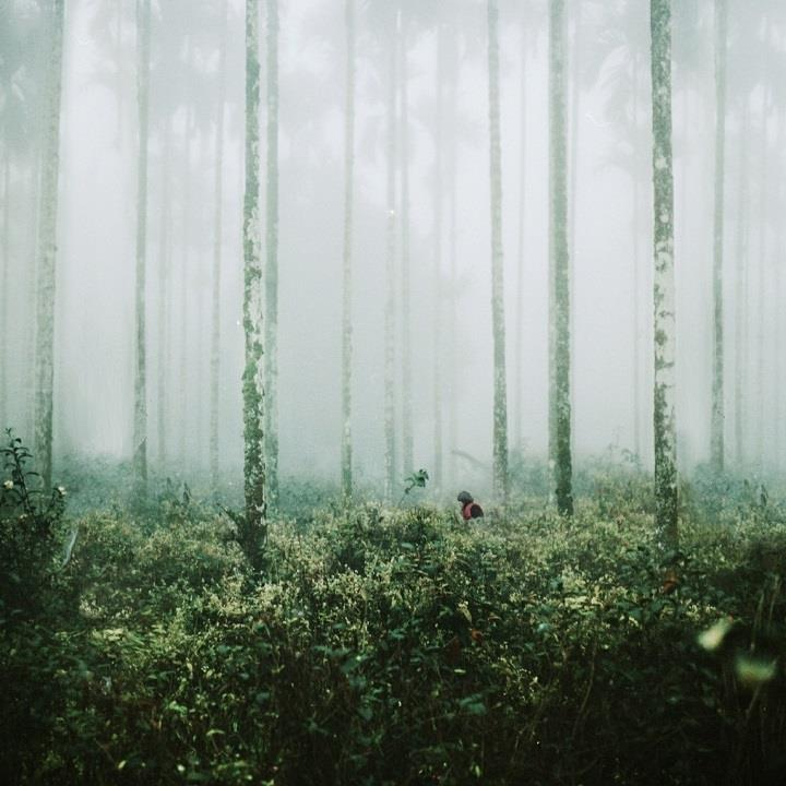 Angex Lin - forest