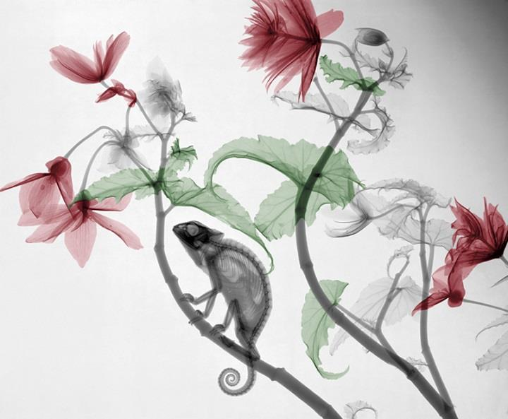 Arie van't Riet - Colorized X-ray Images of Nature