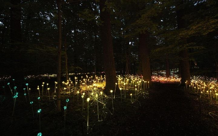 Bruce Munro - lights