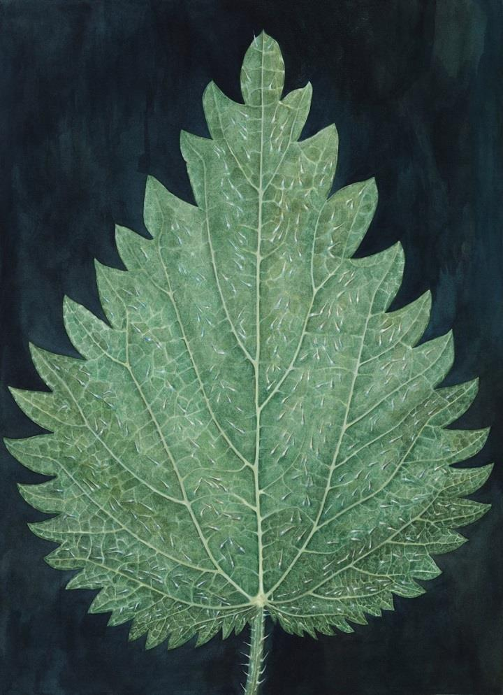 Christine Odlund - leaf
