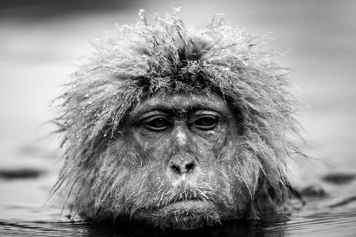 David Yarrow - Encounter