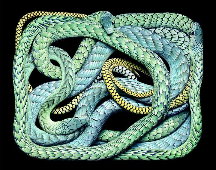 Guido Mocafico - serpent series