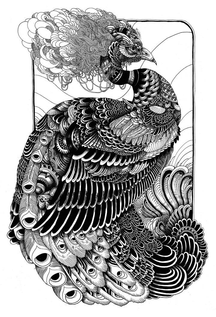 Iain Macarthur - peacock