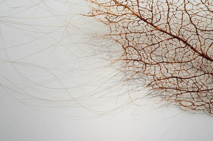 Jenine Shereos - Leaf Skeletons Made of Human Hair