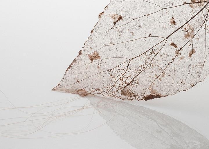 Jenine Shereos - hair leaf art