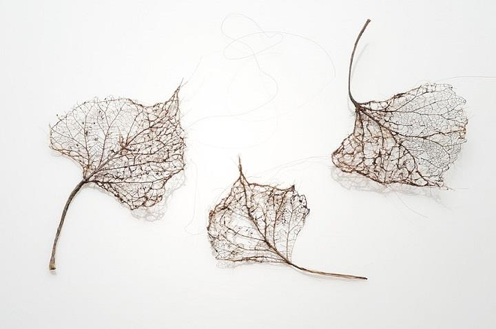 Jenine Shereos - knitted leaves