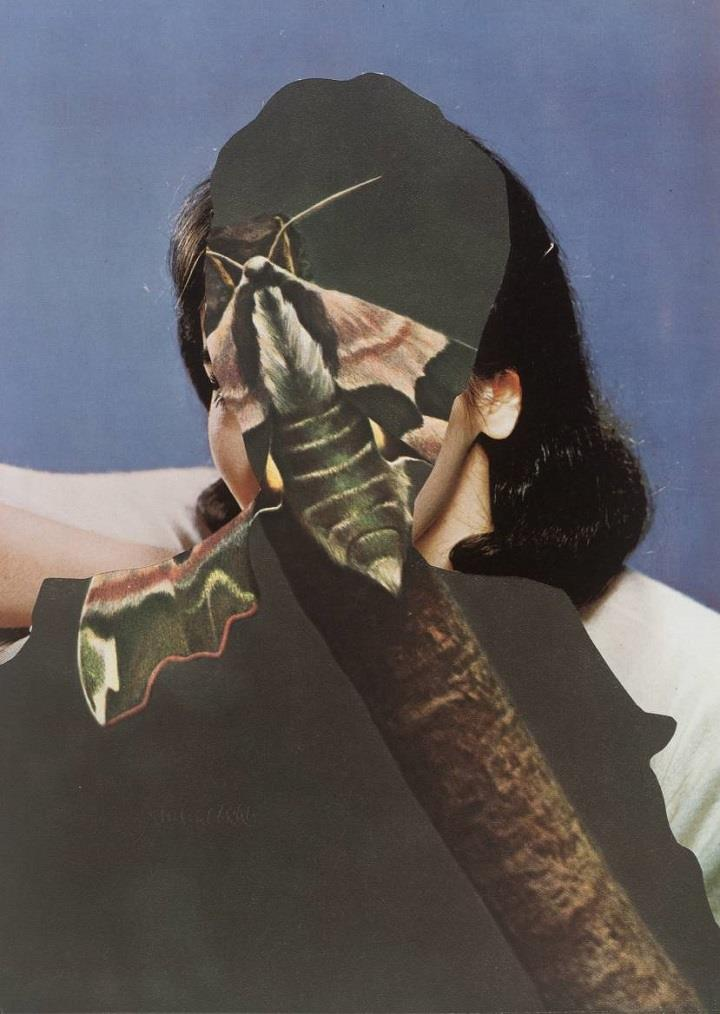 John Stezaker - butterfly person