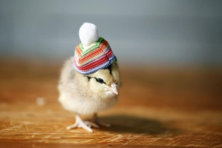 Julie Persons - Chicks in Hats