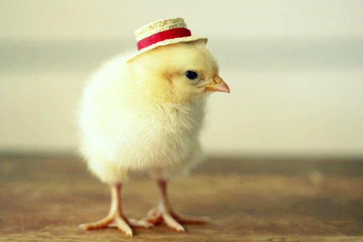 Julie Persons - cute chick in a hat