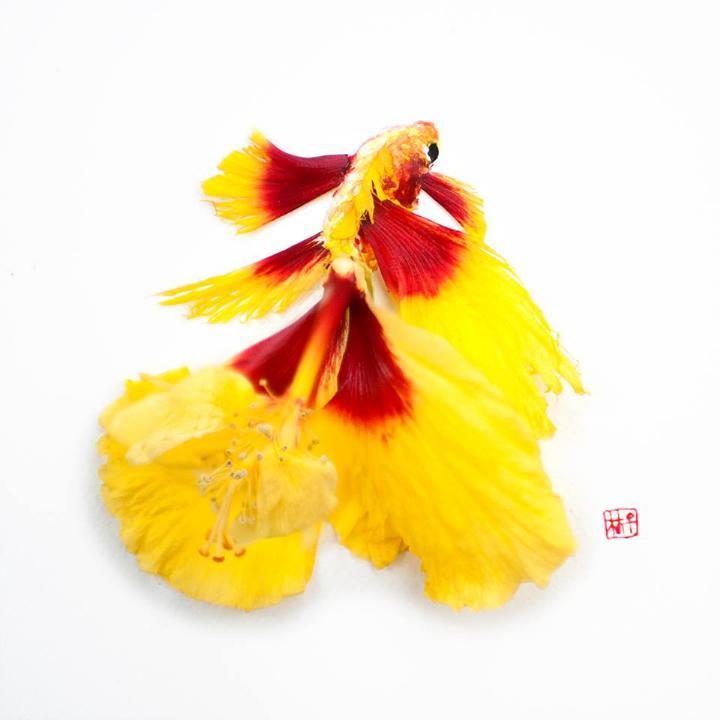 Lim Zhi Wei - bloomingfish