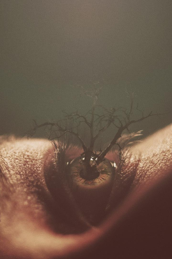 Nevan Doyle eye tree