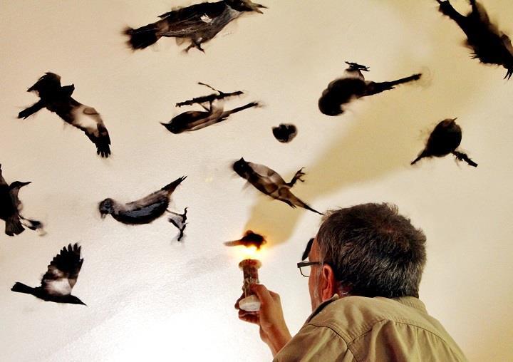 Steven Spazuk - a bird painting