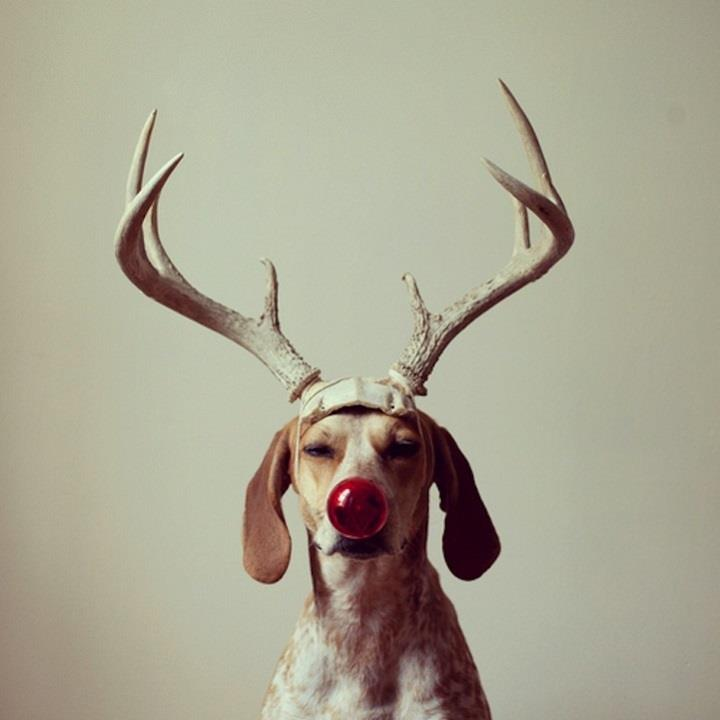 Theron Humphrey - Maddie with antlers
