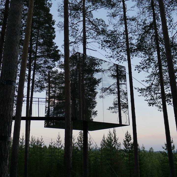 Treehotel - forest