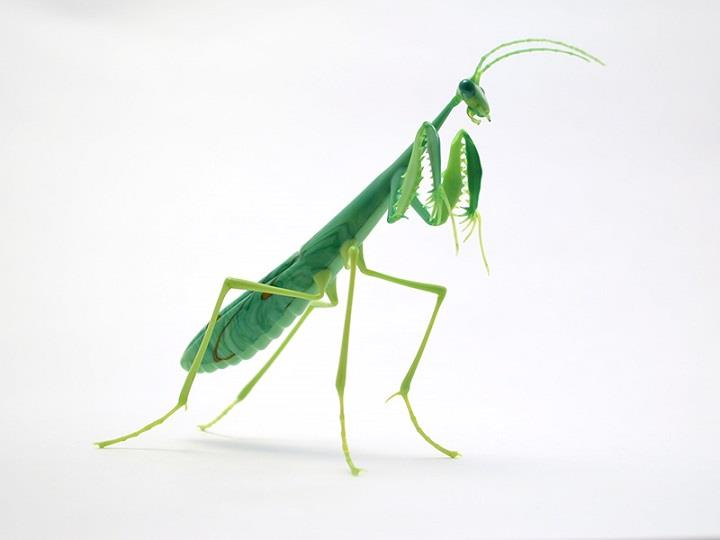 Wesley Fleming - green mantis