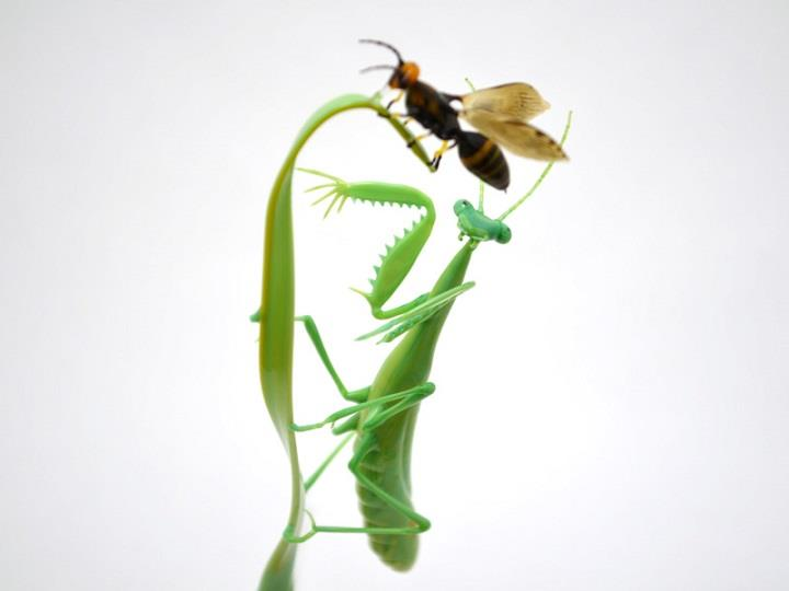 Wesley Fleming - mantis wasp